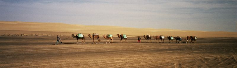Camel Safari into the White Desert